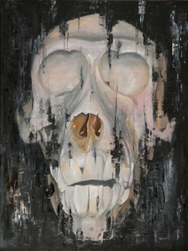 Lebka paviána / Skull of Baboon